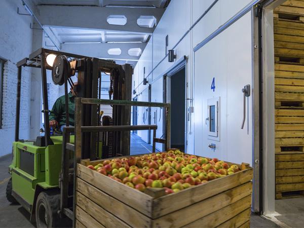 Refrigeración sector hortofrutícola