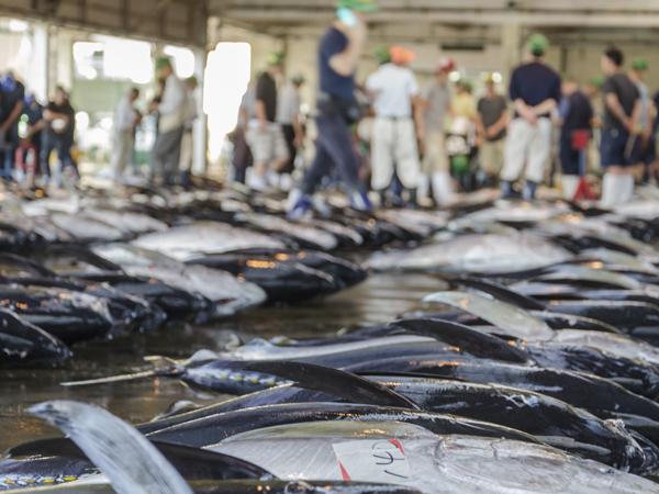 Refrigeración del sector pesquero
