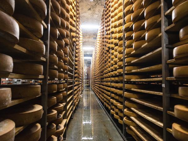 fermentación queso