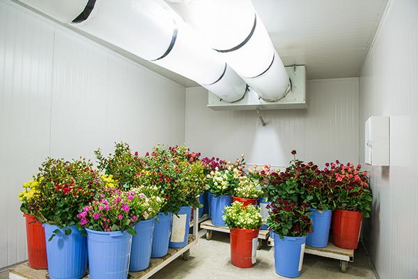 refrigeración plantas